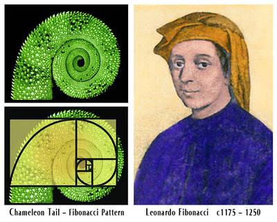 132731499843413120334_Fibonacci-Lead-in-Image