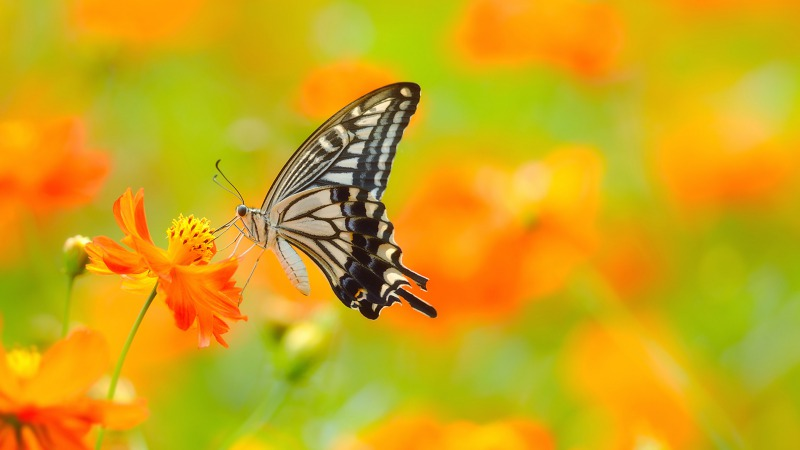s_butterfly-on-flower_337