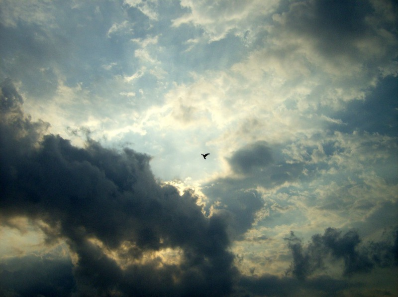 s_holy_spirit_by_dydemoz-2